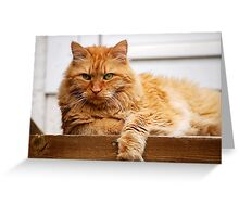 Malcolm the Watchcat Greeting Card