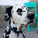 Greek Dalmation by Maria Bell