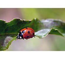 Ladybug Bridge Photographic Print