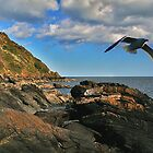 Seagull over Helford by AndyReeve
