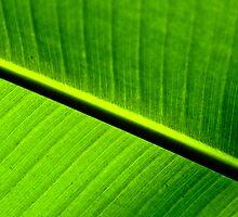 Green by Valerie Loho