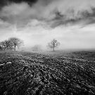 Trees in a Misty Field by Martin Williams