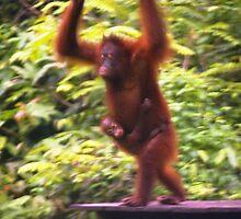 Orangutan with baby, Sepilok Malaysia by Mishimoto