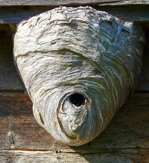 Hornet's Nest by MaeBelle