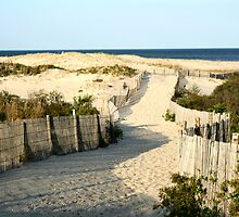 Dune fence by tanmari