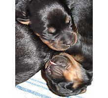 A Beautiful Dreamer - Rottweiler Puppies Photographic Print
