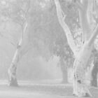 ~Ghost Gums in the Fog~ by a~m .