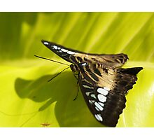 Brown and Beautiful Photographic Print