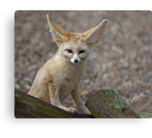 So I'm a little small for my Ears......... Metal Print
