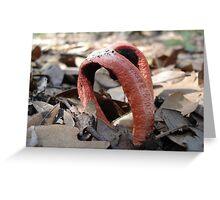 Stinkhorn fungi Greeting Card