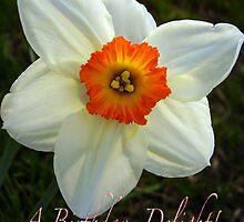 White Daffodil  by tonymm6491