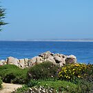 Walking in Monterey,CA by VanillaDolphin