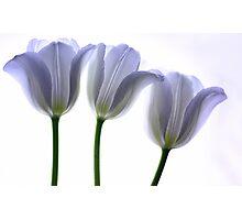 Lilac Chiffon Photographic Print