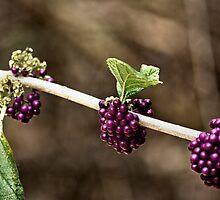 The True Vine ~ by eyesonme