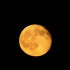 Shoot the Moon by Linda Miller Gesualdo