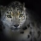Snow Leopard by DanielTMiller