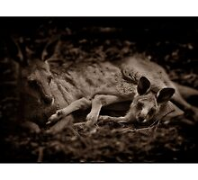 Kangaroo Mother and Joey by Shannon Benson