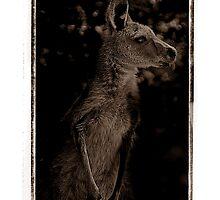Young Kangaroo by Shannon Benson