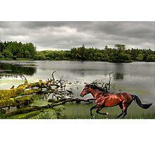 1182-Riverside Trot Photographic Print