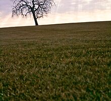 Illinois Landscape by bassman6607