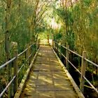 Footbridge Amongst the Trees by Elaine Teague