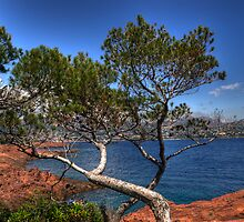 trees over the Mediterranean Sea by GOSIA GRZYBEK