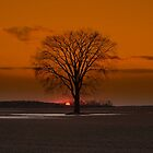 Majestic Elm Of Camlachie by dendrology