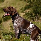 German pointer by SWEEPER