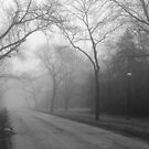 Into the Fog by dsa157