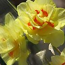 ~Spring Frenzy~ by NatureGreeting Cards ccwri