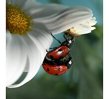 Ladybugs in love. by Ellen van Deelen