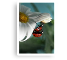 Ladybugs in love. Canvas Print
