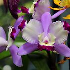 Lovely Orchid by Kate Adams