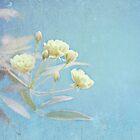 Popcorn Roses I by shanarae