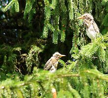 Spot the Five Week-old Green Herons. by DigitallyStill