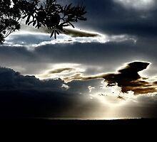 """""""Metalic Morn"""" by debsphotos"""