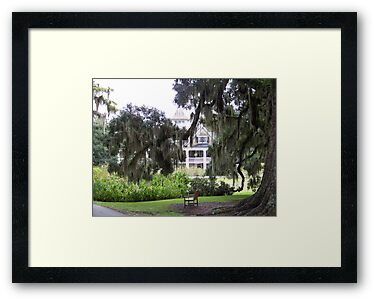 Magnolia Plantation by Forget-me-not
