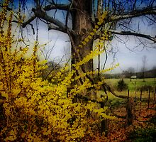 color spring yellow... by budrfli