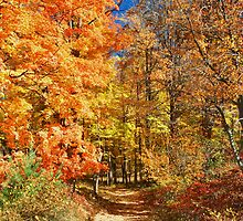 Northeast Fall Color Explosion by Stephen Vecchiotti