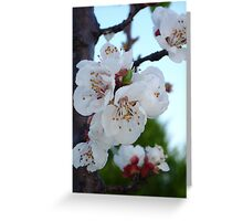 Five Petals Per Blossom Greeting Card