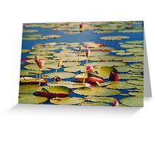 Dawn Lilies Greeting Card