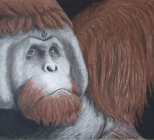 What the Future Holds - Orangutan by Heather Ward
