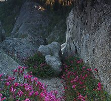 Penstemon, Moro Rock, & the Sierra Nevada by Adam Bykowski