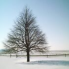 The Perfect Winter Tree - Vertical Portrait View - Feb. 2008 by Christopher Johnson