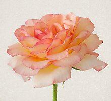 Pink Tutu by AnnieD