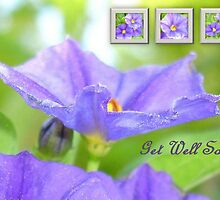 Get Well Soon Greeting Card with Solanum Flower Collage by taiche