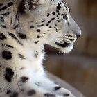 Leopard Profile by PsiberTek