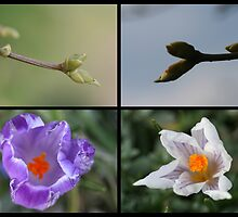 Four witnesses of spring by wise
