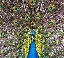 Symmetry by Sylvan