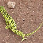Chameleon, Lake Manyara, Tanzania by mystery